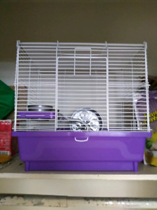 Hamsters with everything included for sale
