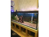 Aquarium fish tank with stand and all equipment needed
