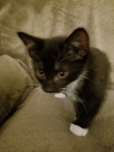 Kittens need new homes