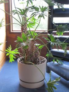 Plants - indoor
