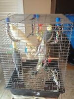 Four beautiful cockatiels cage and assessories