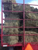 Horse hay today $3