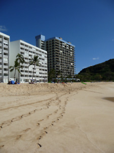 Only 1 week left!  Beautiful oceanfront condo on Oahu.