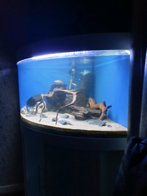 Corner fish tank with extras