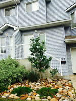 Beautiful Bright Townhouse 2BHK for Rent-Timberlea