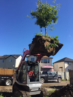 Choose our bobcat service company: It's important work!