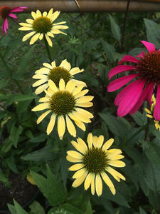 Perennial Plant Sale May 20