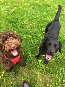 Barrhaven Area Dog Walking and Pet Sitting!