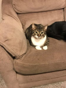 Looking to rehome two cats, can split up.
