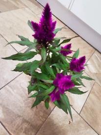 Plant £1.50