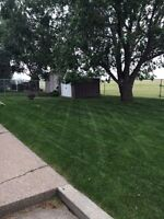 Family Yards! Lawn Care