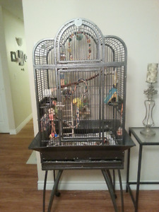 Lovebirds + Cage & Accessories