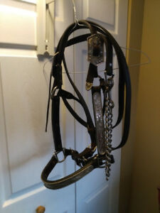 HORSE SHOW HALTER FOR SALE