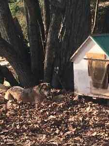 Mitz has been found !!!!!!!  LAMABLE area Belleville Belleville Area image 3