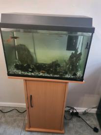 Cold Water Aquarium fish tank 60l plus stand inc Danios and Platy