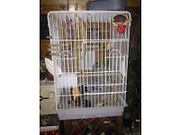 Bird cage plus food plus cleaning product plus father spray