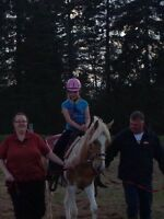 Paint filly 2 years old