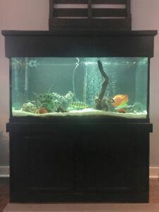 Aquarium 90 gallons, meuble et couvercle bois noir TOUT INCLUS