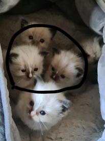 Randomly kittens
