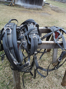 NEW PRICE! Harness maker crafted Biothane Driving Harness Belleville Belleville Area image 4