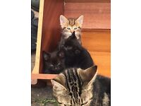 4 kittens choose one or more. £35 each