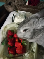 Looking for anything to help with  costs of our rabbit rescue.