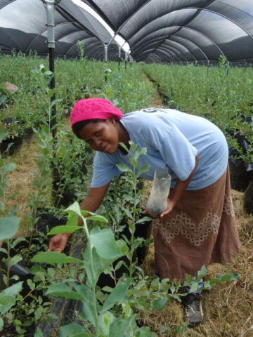 hobby farm where, how and when