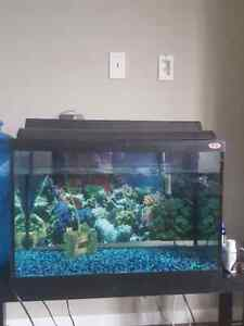 20 gal fish tank includes everything you'd ever need