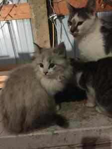 Free kittens looking for forever homes Regina Regina Area image 7
