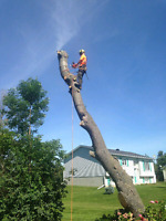 Tree removal, pruning, shaping, stump grinding, arborist
