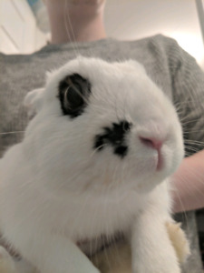 Free bunny (homemade cage for extra)