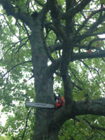 LumberJack Tree Services