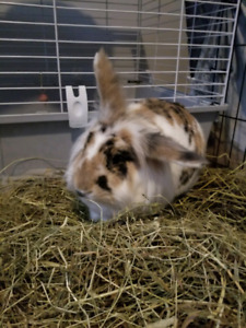 *FREE* two bonded rabbits