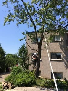 Tree REMOVAL-TREE Triming/Pruning>FALL SPECIAL...... Kitchener / Waterloo Kitchener Area image 3