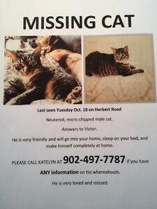 Lost cat in halifax