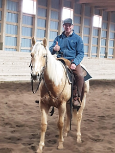 Well-bred barrel horse for sale