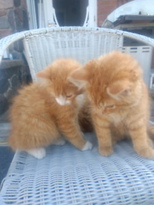 Kittens to place in loving home.