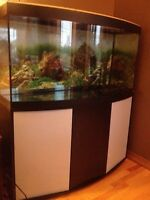 Bow Front 60 Gallon Fish Tank and Stand