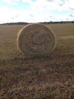 Oat green feed bales