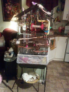Two finches. Bird cage and accessories