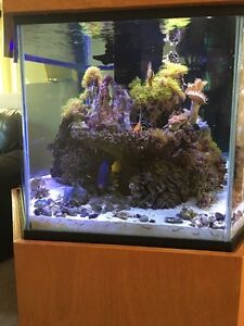 Reef Keeping and General Aquarium Stewardship for Hire