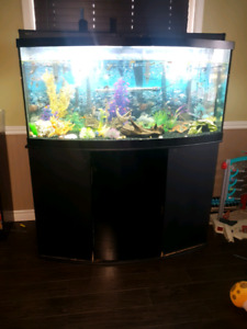 90 gallon Bow Front  fish tank and stand.