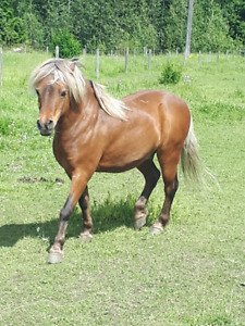Friendly Pony looking for 5* Home
