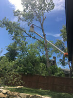 Calgary and Chestermere tree services 4038805148