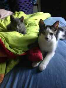 Two male cats free to home