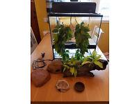 Reptile Vivarium & Accessories