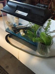 Glass aquarium for sale
