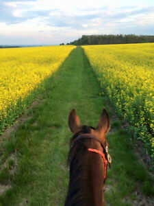 Horse Conditioning