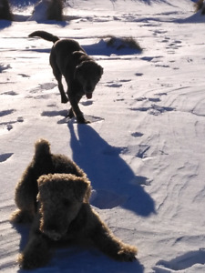 Kijiji Dog Walking Services