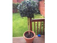 2 artificial trees excellent for the garden